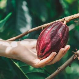 adotta un albero - chocolate for family
